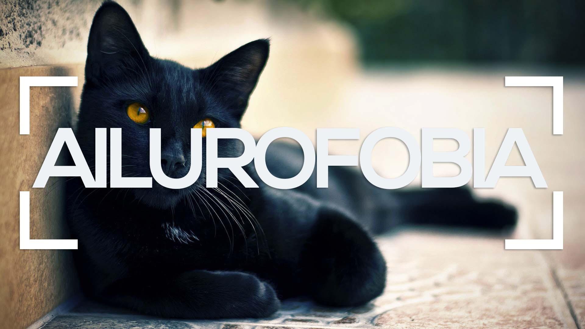 Se muestra un gato negro tumbado y la palabra ailurofobia