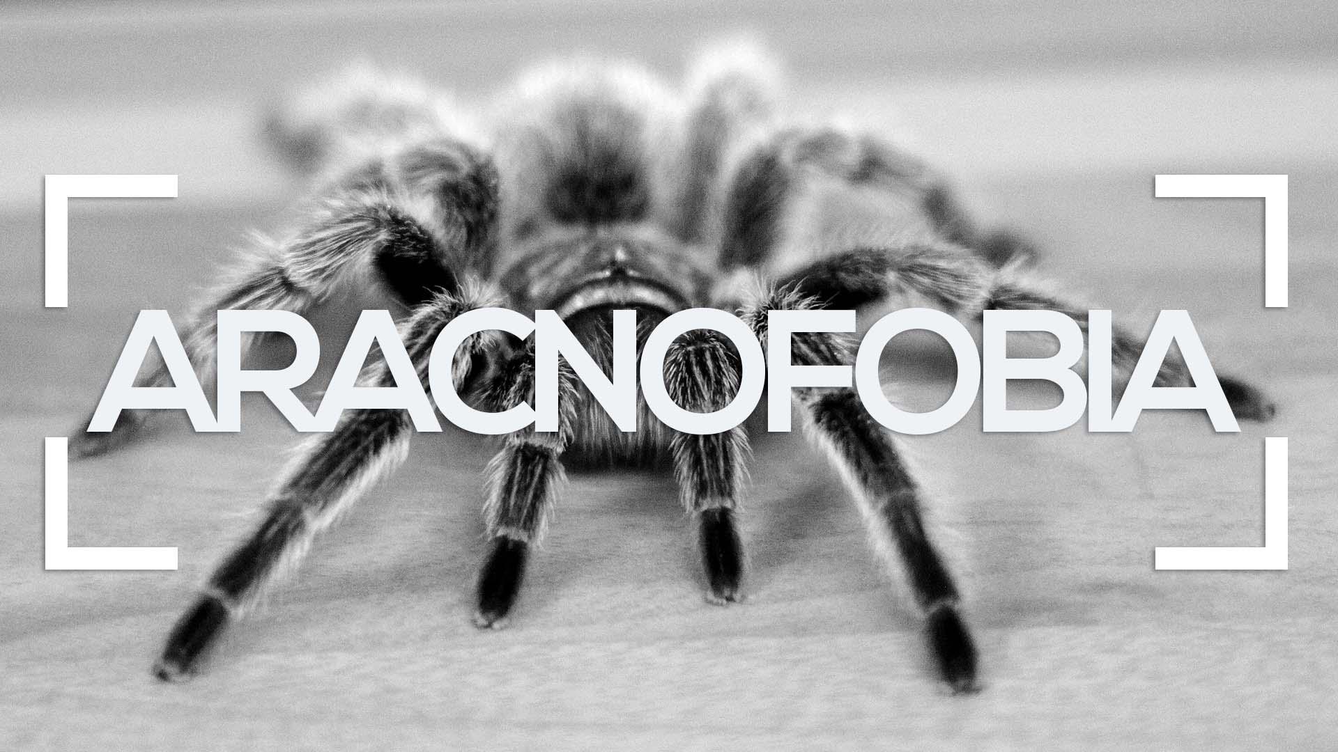 Se muestra una araña con la palabra Aracnofobia