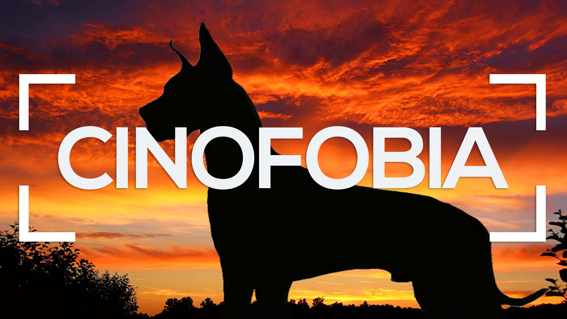 Se muestra el perfil de un perro Gran Danes y la palabra cinofobia