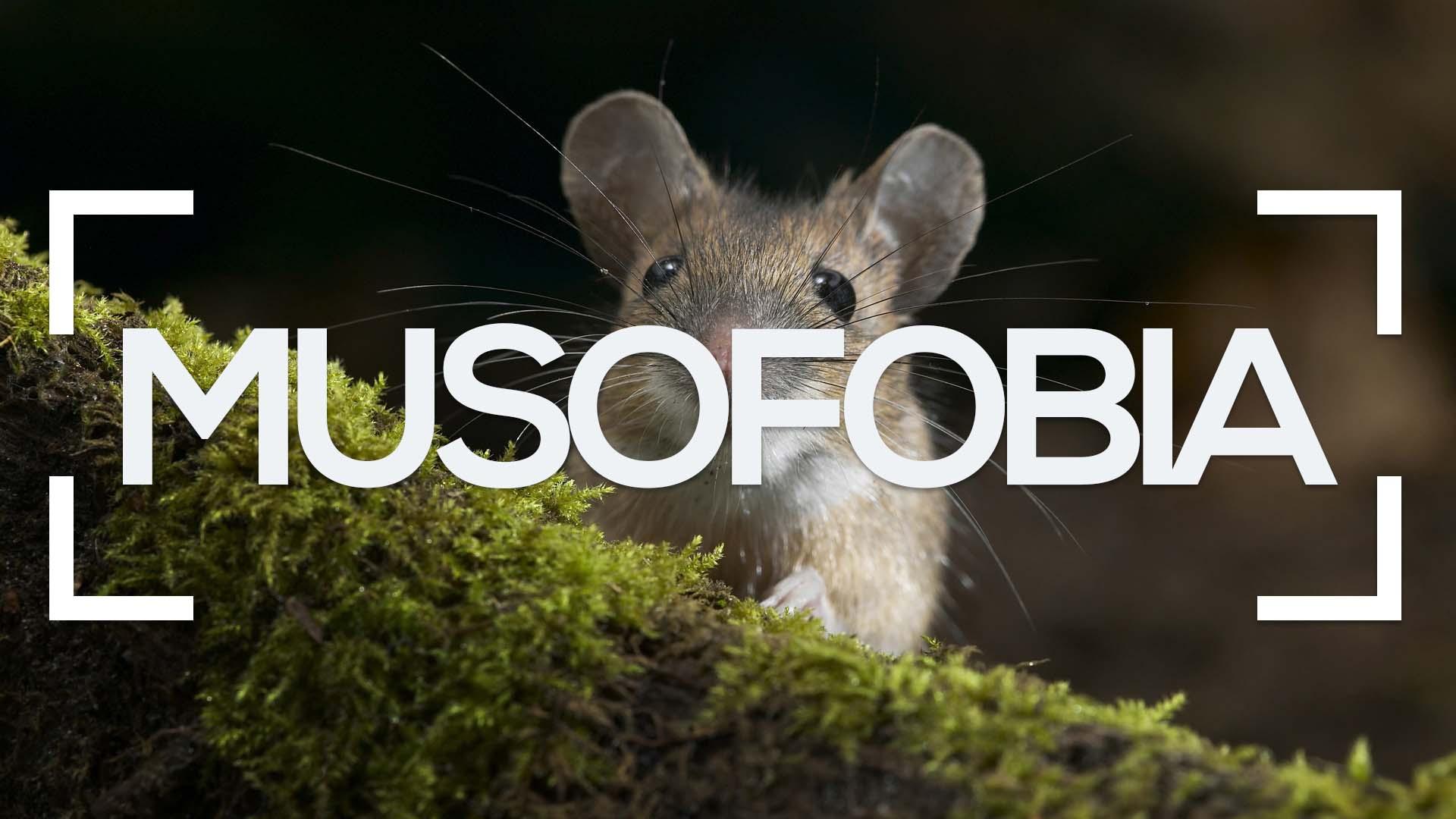 Se muestra un ratón en un bosque y la palabra musofobia