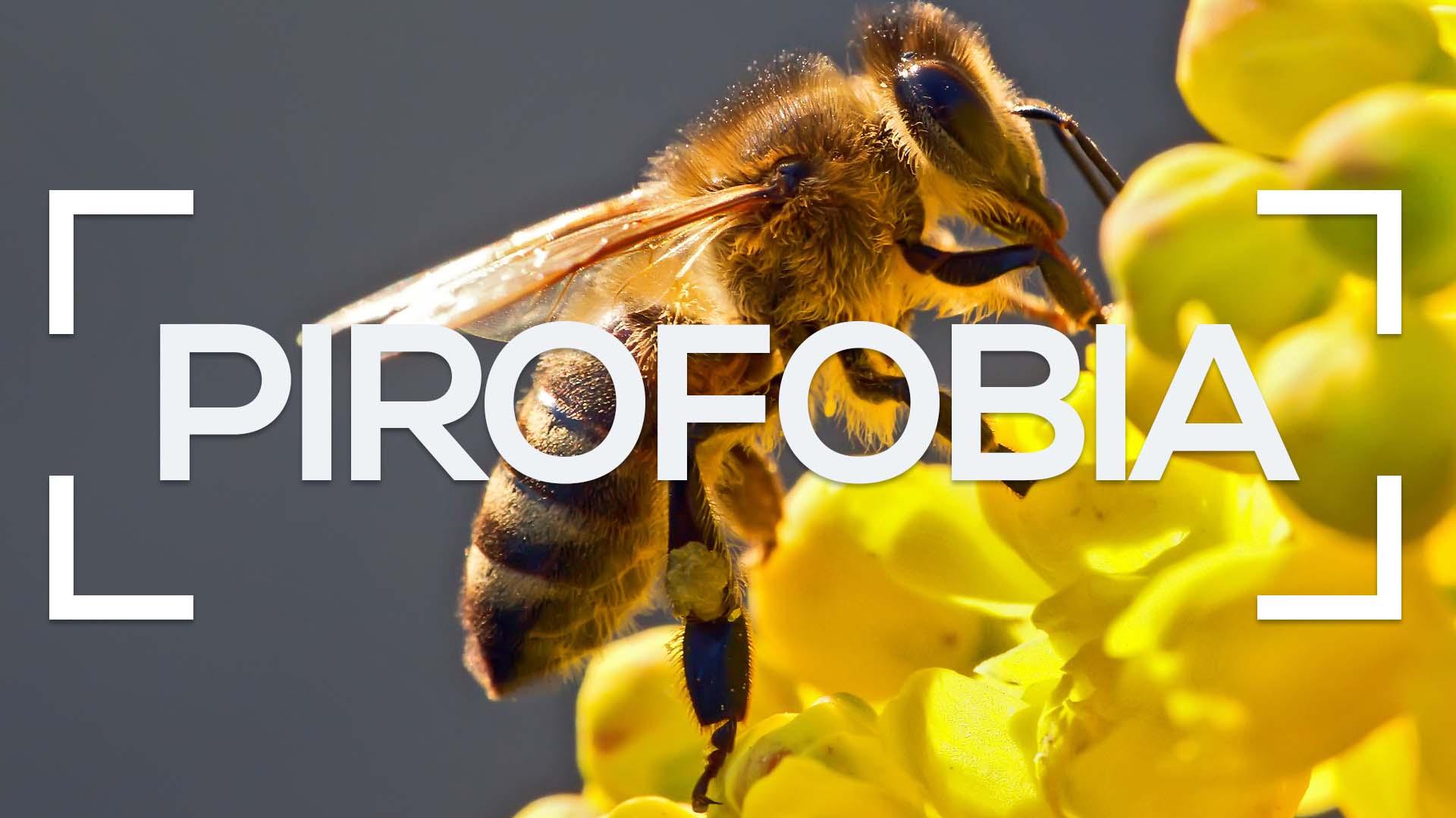 Se muestra una abeja recolectando polen y la palabra pirofobia